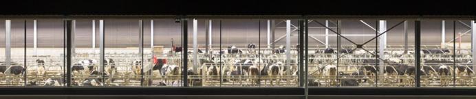 Lely L4C šviesa karvėms