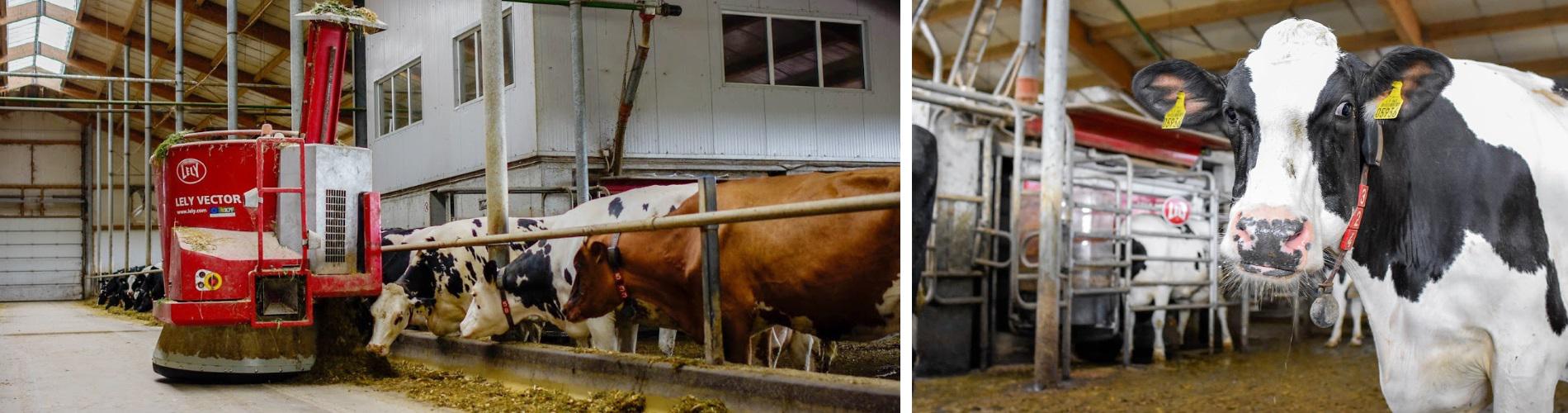 Vienas sėkmingiausių ūkių Lietuvoje: ūkyje vienareikšmiškai patogiausi LELY sprendimai